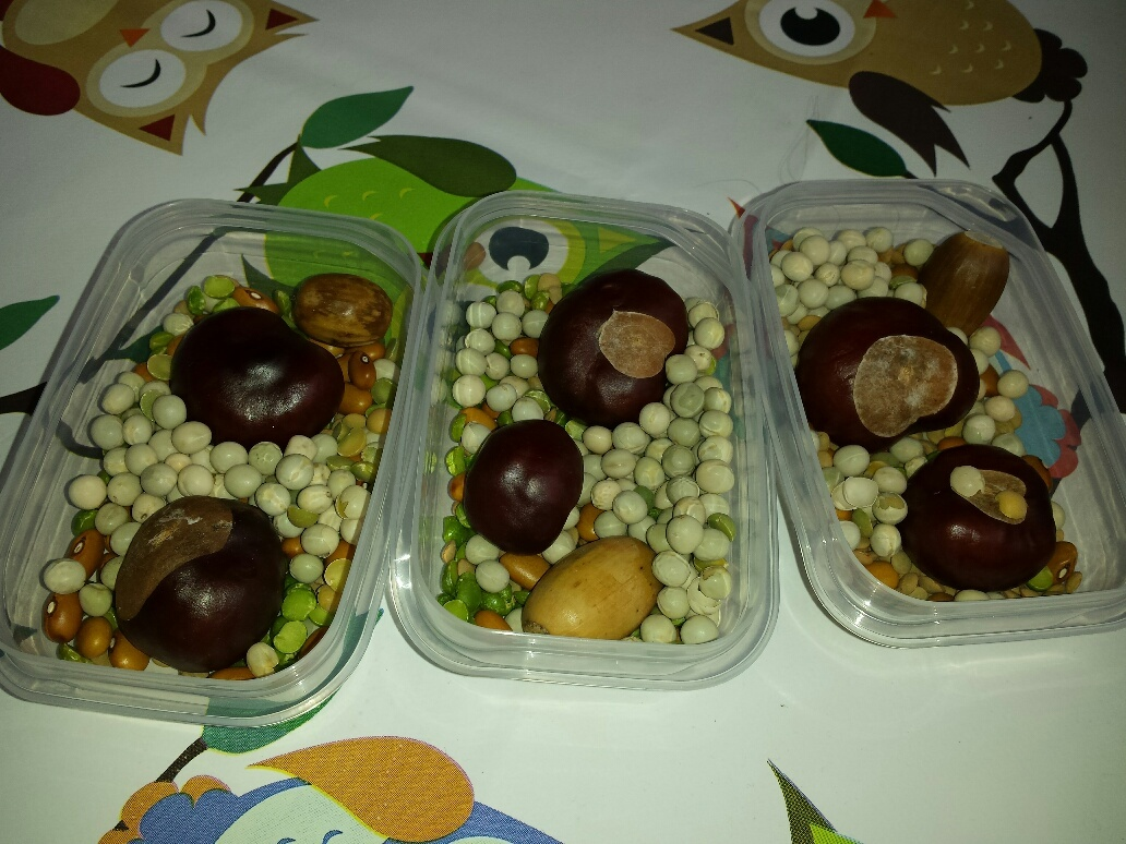 peulvruchten en kastanjes