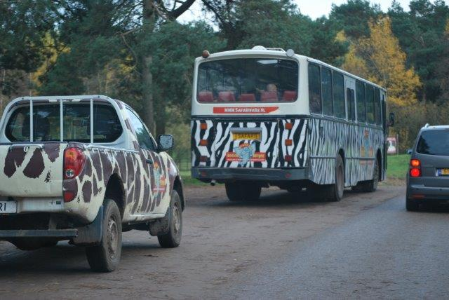 wildsafari