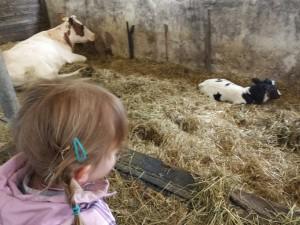 campina boerderijdagen