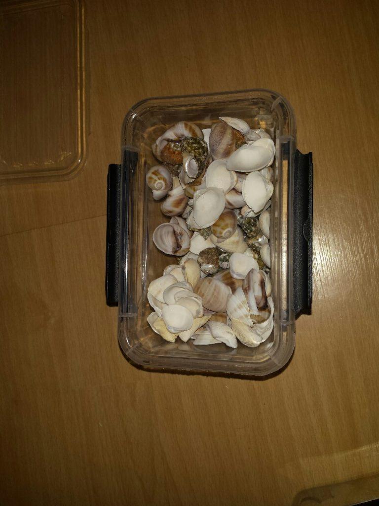 sorteren met schelpen