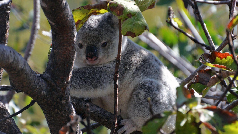 15 mooiste plekke in Australië