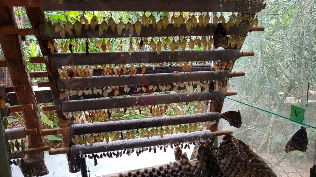 vlinders aan de vliet cocon