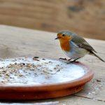 DIY vogelvoer