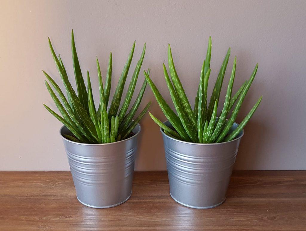 planten voor een sfeervolle slaapkamerinrichting