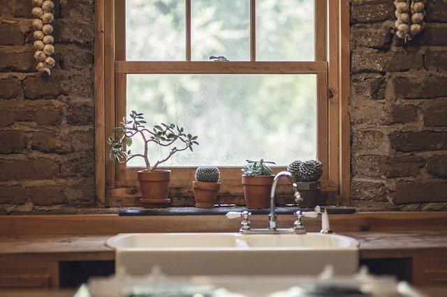 cactussen en knoflook bij ramen