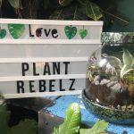 Een plantenterrarium