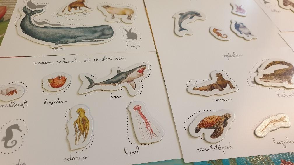 classificeren van dieren