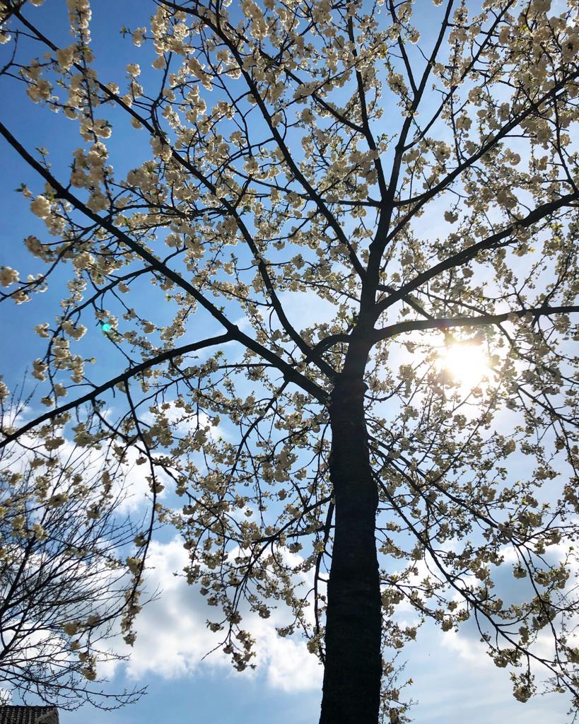 zon schiijnt door bomen