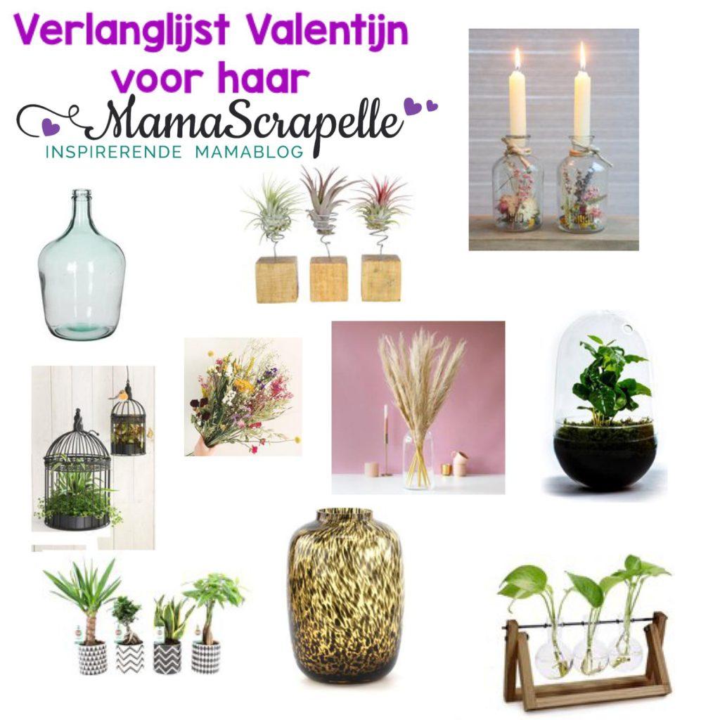 planten vazen en bloemen