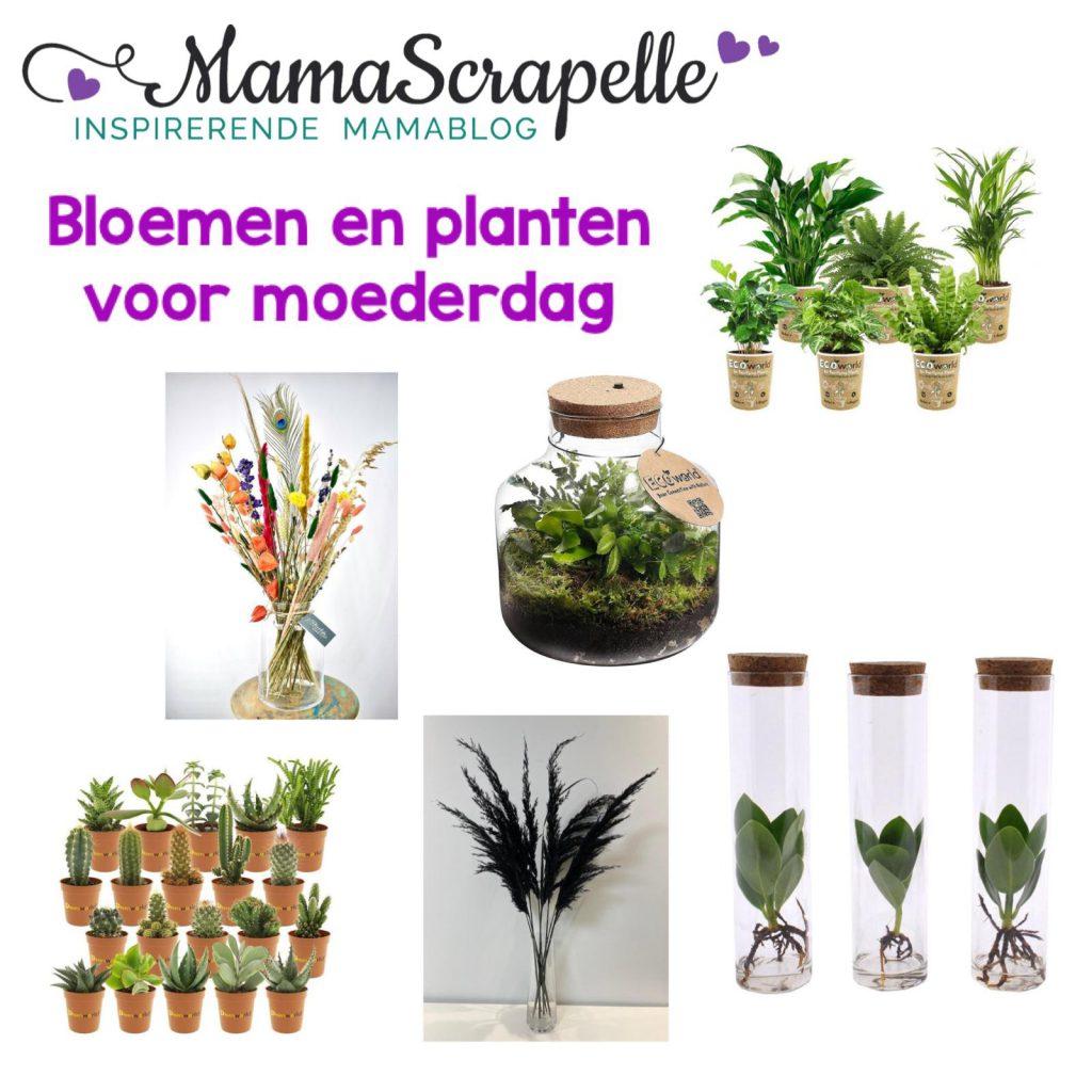 planten voor moederdag