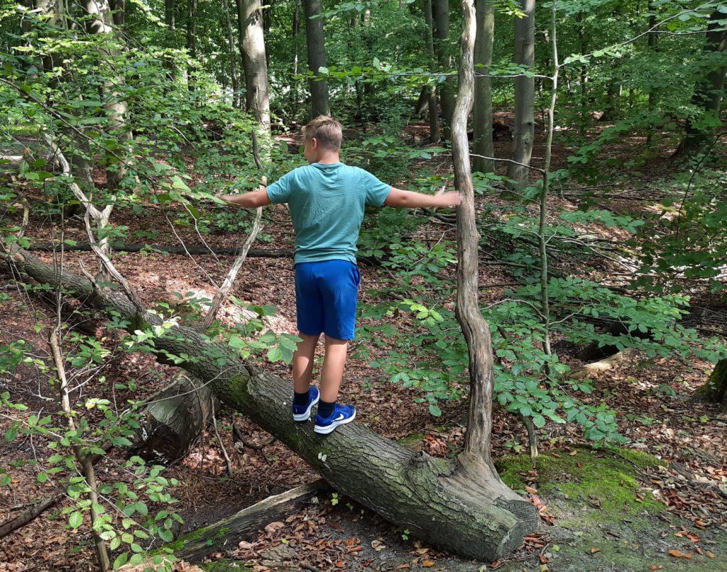 waterloopbos jongen op boom