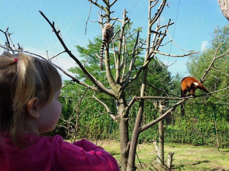 rode wasberen