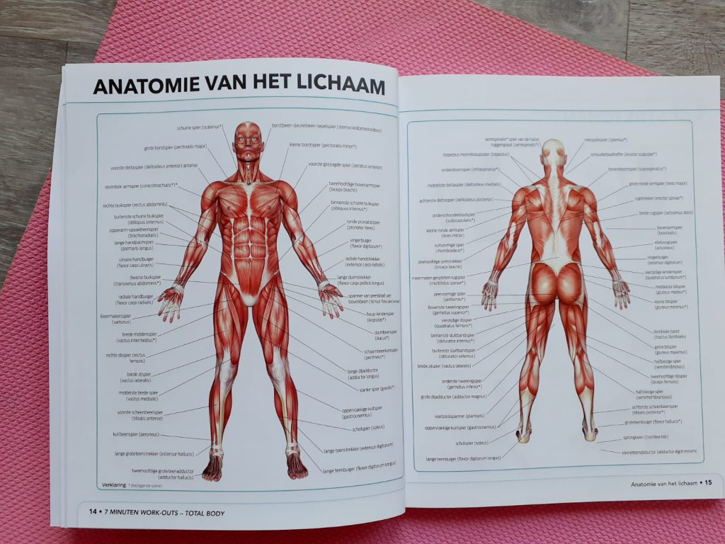 7 minuten work-outs anatomie