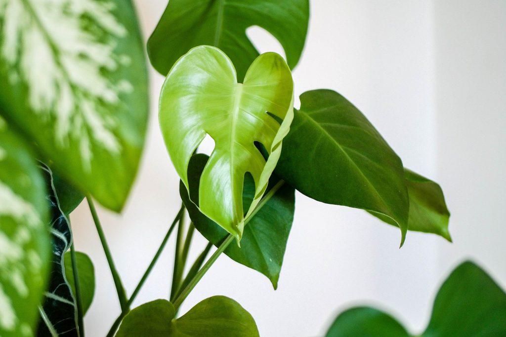 geef je interieur een nieuwe frisse look plant