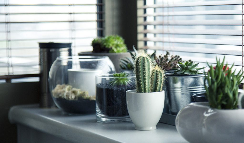 geef je interieur een nieuwe frisse look planten
