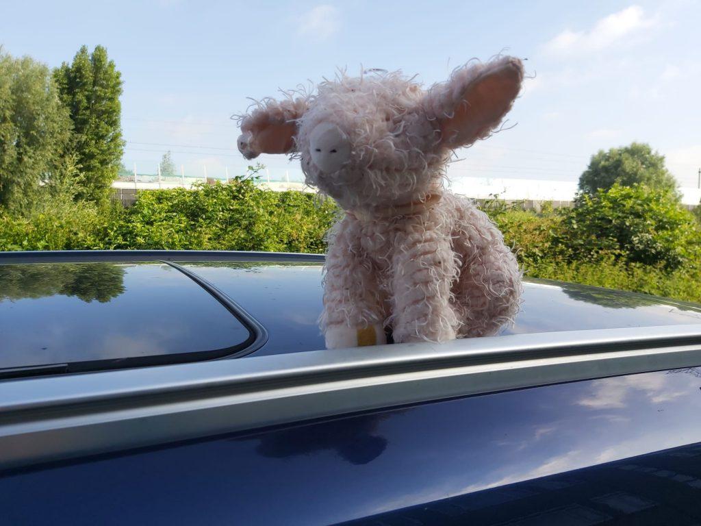 Bunnies auto