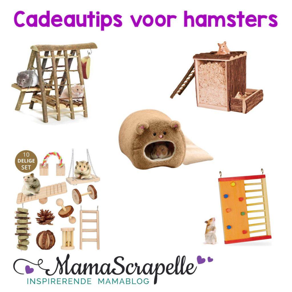 hamster cadeautjes